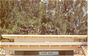 South Orlando FL Gatorland Zoo Postcard p1495 (Image1)
