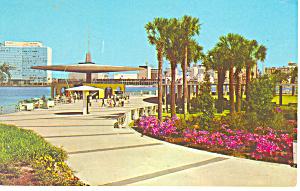 John s River Park Jacksonville FL Postcard p14966 (Image1)