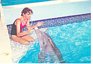 Clearwater Marine Science Center FL Postcard p14975 (Image1)