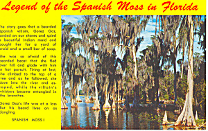 Legend of the Spanish Moss, FL Postcard (Image1)