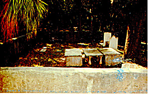 Cumberland Island National Seashore,GA Postcard p14987 (Image1)