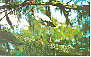 Stephen Collins Foster State Park GA Postcard p14991 (Image1)