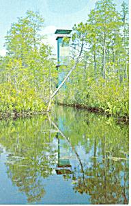 Okefenokee Swamp Park Waycross GA Postcard p14994 (Image1)