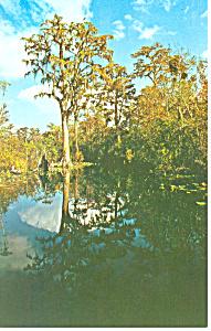 Stephen Collins Foster State Park GA Postcard p14996 (Image1)