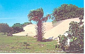 Cumberland Island National Seashore GA Postcard p15057 (Image1)