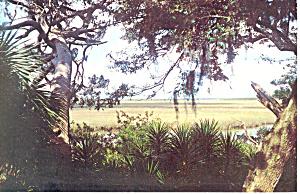 Cumberland Island National Seashore GA Postcard p15059 (Image1)
