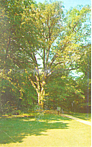 Lincoln Birthplace,Hodgenville, KY Postcard (Image1)