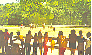 YMCA Camp,Becket, MA Postcard 1978 (Image1)