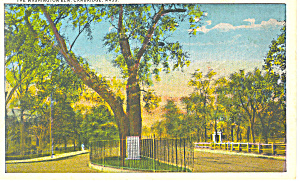The Washington Elm,Cambridge, MA Postcard (Image1)