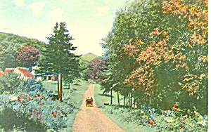 Horse Wagon On Country Road, Scenic Postcard