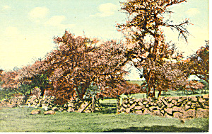 Old Stone Wall, Scenic Postcard