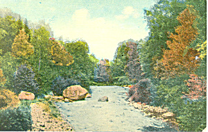 Tree Lined Stream, Scenic Postcard