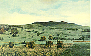 Corn Stalks Bundled Together, Scenic Postcard (Image1)
