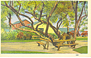 Washington Park,Cheboygan, MI Postcard 1946 (Image1)
