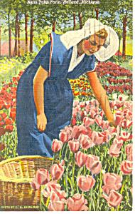 Nellis Tulip Farm, Holland, MI Postcard 1952 (Image1)