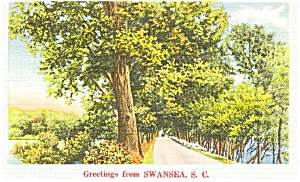 Swansea SC Wooded Lane Postcard p1533 (Image1)