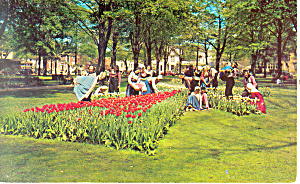 Tulip Time in Holland,MI Postcard (Image1)