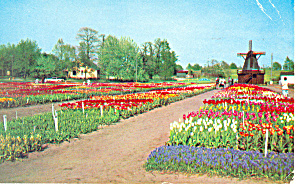 Tulip Time in Holland,MI Postcard  1957 (Image1)