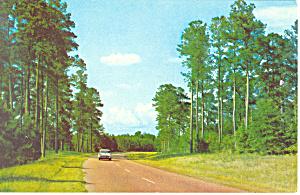 Natchez Trace Parkway MS Postcard p15414 (Image1)