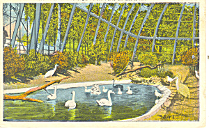 Forest Park St Louis MO Postcard p15427  1925 (Image1)