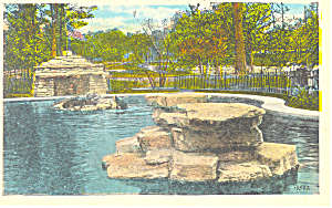 Seals at Zoo,Forest Park, St Louis, MO Postcard (Image1)