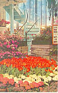 Forest Park St Louis MO Postcard p15493 (Image1)