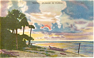 Florida Tropical Splendor Postcard p1551 (Image1)