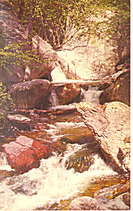 Whitewater Creek,Gila National Forest, NM  Postcard (Image1)