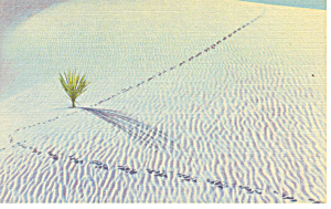 White Sands National Monument NM  Postcard p15673 (Image1)