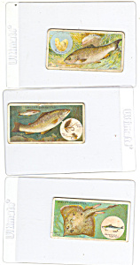 Will's Cigarette Cards-fish & Bait-lot (3)