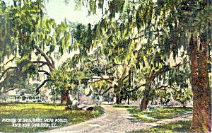 Avenue of Oaks Runney Meade SC  Postcard p16153 (Image1)