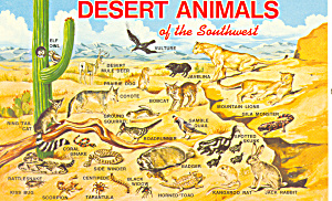 Desert Animals Of The Southwest Postcard P16194