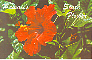 Hawaii State Flower Red Hibiscus Postcard p16270 (Image1)
