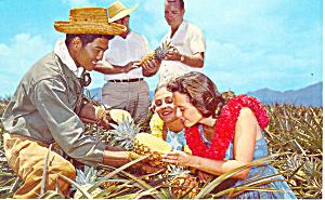 Golden Hawaiian Pineapple Postcard p16271 (Image1)