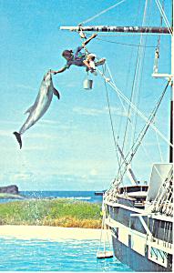 Sea Life Park Oahu Hawaii  Postcard p16292 (Image1)