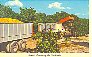 Florida Oranges by the Truckload Postcard (Image1)