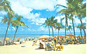 Beach Scene Coconut Palms Fl Postcard P16453