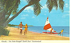 Beach Scene  Palm Trees FL Postcard p16458 (Image1)