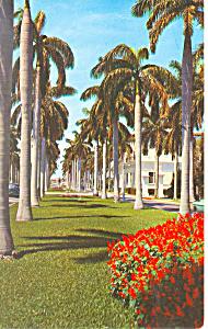 Avenue of Royal Palms FL Postcard p16460 (Image1)