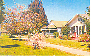 Lake Wales FL Street with Orchid Trees Postcard p16462 (Image1)