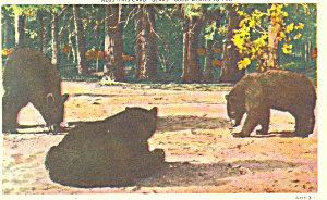Bears Good Wishes Postcard P16811
