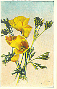 California Poppy Postcard (Image1)