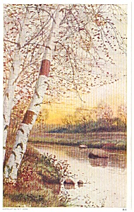 Birch Tree And Stream Scene Postcard P1686