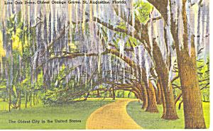 Live Oak Drive St Augustine Florida Postcard p16922 1959 (Image1)