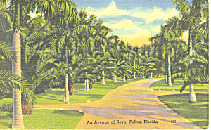 Avenue of Royal Palms Miami Florida Postcard p16925 (Image1)