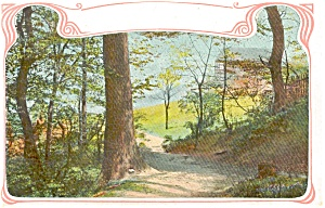 Woodland Scene Divided Back Postcard P1694