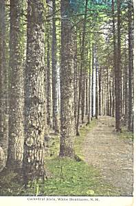 Cathedral Aisle, White Mountains,NH   Postcard (Image1)