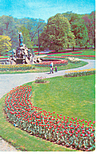 Tulips Washington Park Albany  NY  Postcard p17200 1962 (Image1)