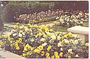 Jackson Perkins Rose Garden Newark NY  Postcard p17245 (Image1)