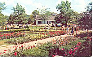 Jackson Perkins Rose Garden Newark NY  Postcard p17246 (Image1)